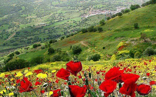 Newroz Kutlama